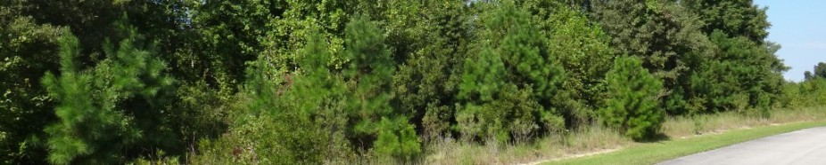 Lot 84 Eagle Nest Trail, Blounts Creek, NC - Eagletrace